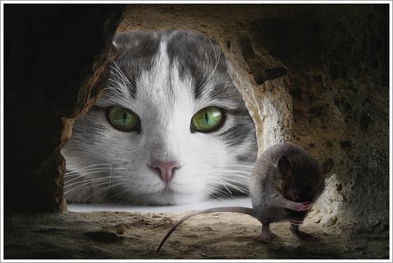 猫とねずみ