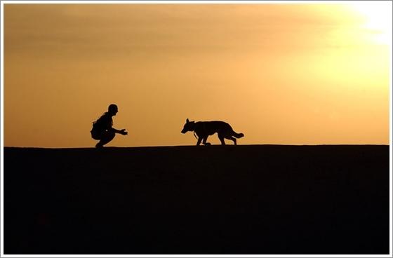 僕のワンダフルジャーニーに登場の犬種は?生まれ変わりが可愛い!