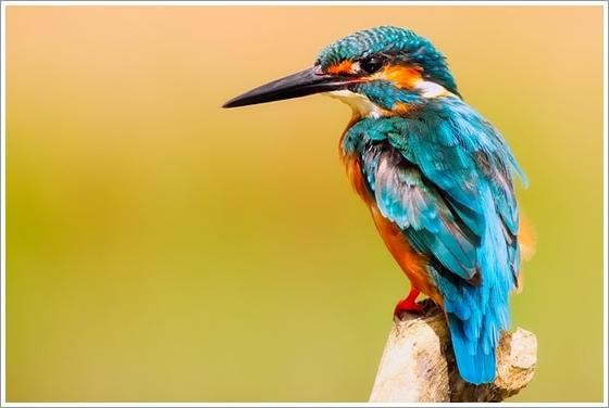 彼女がその名を知らない鳥たちのタイトルの意味は?ネタバレと感想・考察