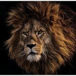 実話ライオン25年目のただいまはなぜライオン?タイトルの意味は?